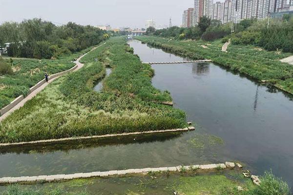 河流湖泊水草生态治理2