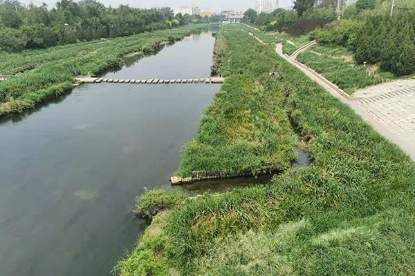 河流湖泊水草生态治理3